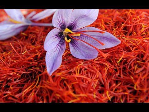 Шафран поможет вылечить рак печени целебные свойства приправы шафран 33 рецепта лечения шафраном