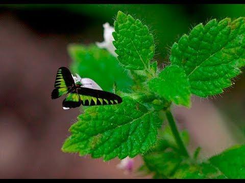 Лечебная трава мелисса или лимонник  на Вашем подоконнике  8 лучших рецептов лечения мелиссой