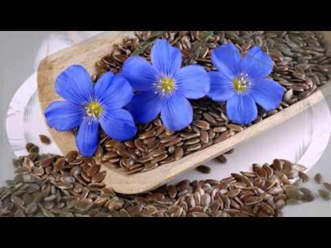 Лен культурный. Лекарственные травы