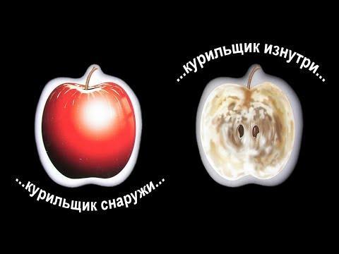 ПРОДУКТЫ, которые ВЫВОДЯТ НИ-КОТ-ИН из организма