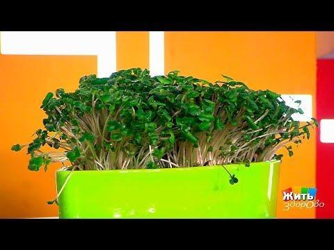 Жить здорово!  Водяной кресс (кресс-салат). (31.05.2017)