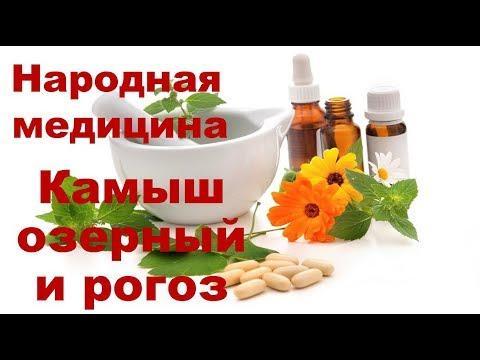 Камыш озерный и рогоз. Рецепты лечения и противопоказания. Чем полезен.