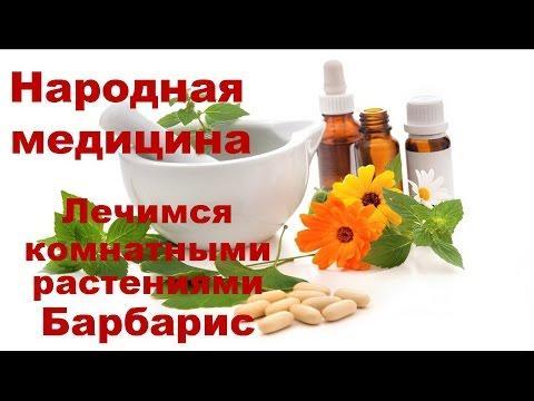 Лечение комнатными растениями Барбарис