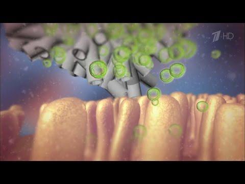 Здоровье. Гид повыбору лекарств. Чем очистить организм.(25.09.2016)