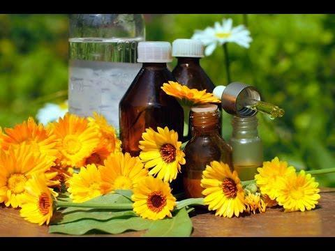Календула ноготки рецепты лечения комнатными растениями